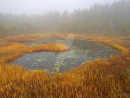 Swamp pond by eswendel
