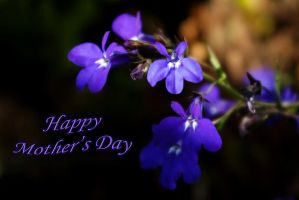 Sweet lobelia - Mother's Day by steppeland