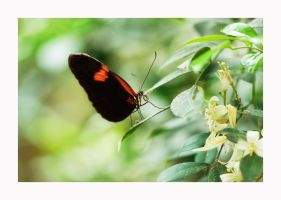 Butterfly 3 by calimer00