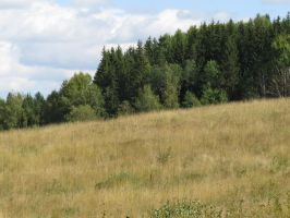 Field and forest 2 by Temansha