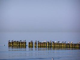 A row of gulls by black-cat16-stock
