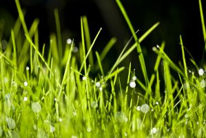 Green Grass 1 by b-a88