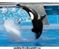 Killer Whale.2 by Della-Stock