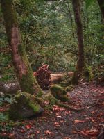 Autumn in Goldstream by midnightstouchSTOCK