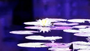 Purple Dreams -- Lillie's Floating on Water by TickTix