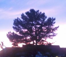 Tree at sunset by BlackAngel0817
