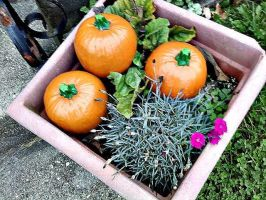 Pumpkins in a Garden by ninaloo1