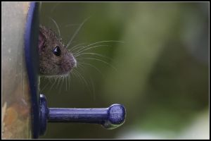 wee tim'rous beastie by cycoze