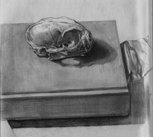 Cat cranium and book still life by TimLiljefors
