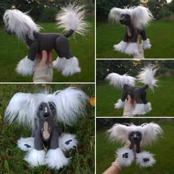 Einstein the Chinese crested pup by demiveemon