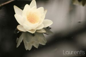 Beauty of the water by laurentis