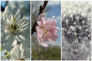 i love spring III by Ecnest