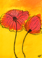 Two Poppies by Night-Eater
