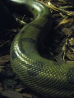 Snake scales by BikerScoutPhoto