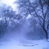 White dreams by GoldenSands