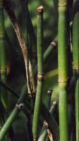 Bamboo by DarlingChristie