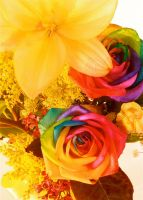 Rainbow Roses by shotsbyg