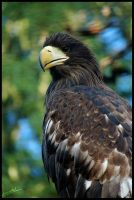 Eagle's Pride by amrodel