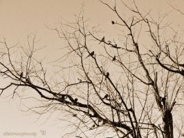 Mourning Doves by stormymay888
