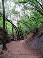 Strange Forest Path by OneofakindKnight