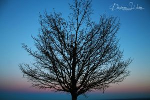 The Perfect Silhouette by DYWPhotography