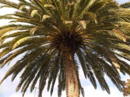Palm tree by voider00