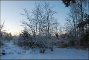 December Afternoon IV by Eirian-stock