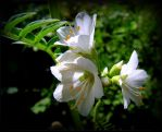 Tiny June Flowers - Light and Shadow by JocelyneR
