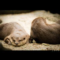 Otter and Friends by Renez