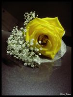 Yellow Rose by Lj-24