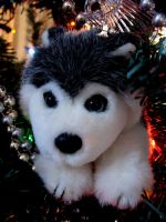 I may be a little Huskie but I fit in the tree by chrisravensar