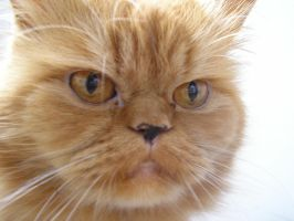 Robert Stalone by cat-lovers