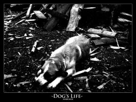 Dog's Life by narvils