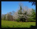 Spring in Dordogne - 1 by J-Y-M