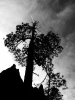 BRYCE CONTRAIL BLACK AND WHITE by CorazondeDios