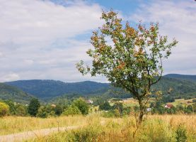 Summer tree I by starykocur