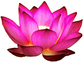 The Perfect Lotus by jeanicebartzen27