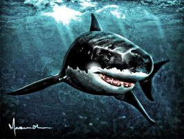 Great White by edde