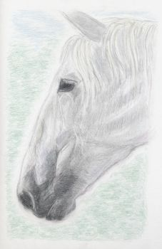 Horses head by Aimee-Williams