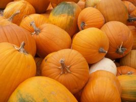 Pumpkins by DiversityDanceQueen