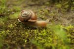 Little Snail 1 by eleutheria-stock