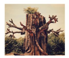 The hunted tree by SuperRoxy