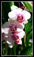 Orchid by TRE2Photo-n-Design