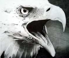 Eagle Pencil Portrait by Cr1msonCloud
