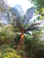 Tree Fern in Taiwanese sub-tropical forest by Oddity-1991
