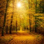 Autumn forest by Justysiak