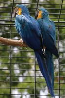 Parrot Stock 03 by Malleni-Stock