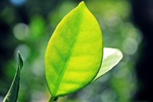 bokeh and leaf by AnonimFilozof
