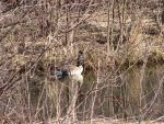 The Lone Goose by cindy1701d