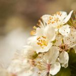 Gentle White Spring by JVarriano
